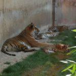 Hanover zoo